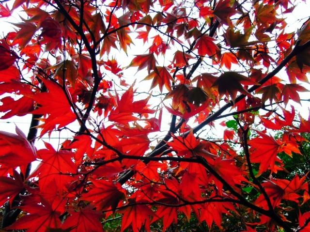 写真素材「Fall」データ追加