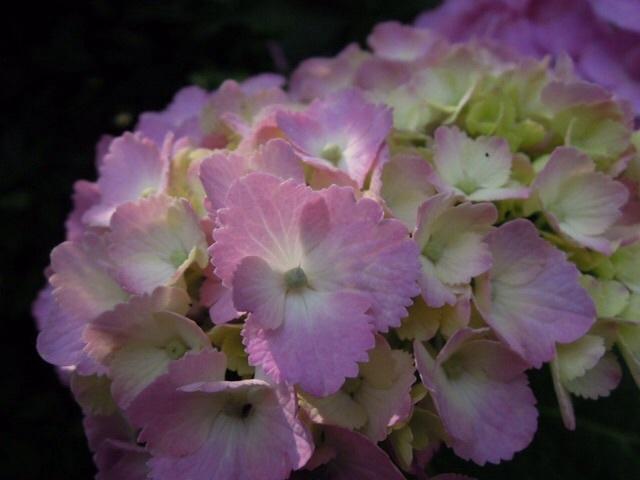 写真素材「flower」データ追加